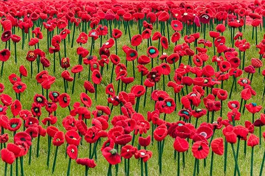 close up of the crochet poppies
