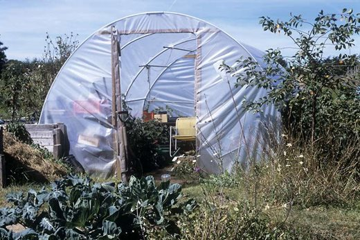 growing in a polytunnel