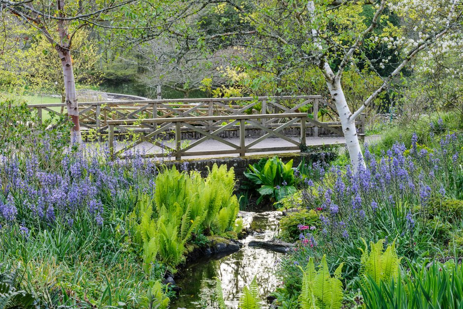 The Stream Garden in spring at RHS Garden Rosemoor