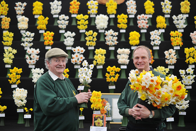 Ron Scamp (left) and Adrian Scamp of RA Scamp with their daffodils at the RHS Flower Show Cardiff 2014