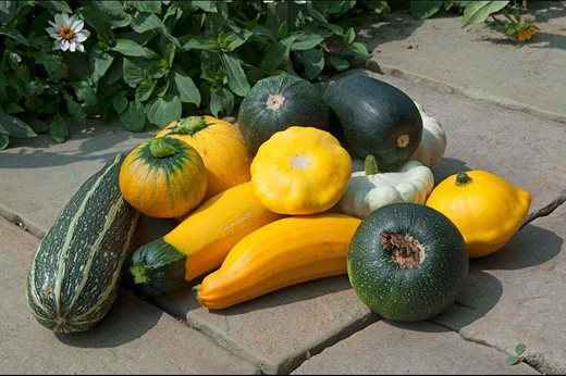 marrows, courgettes