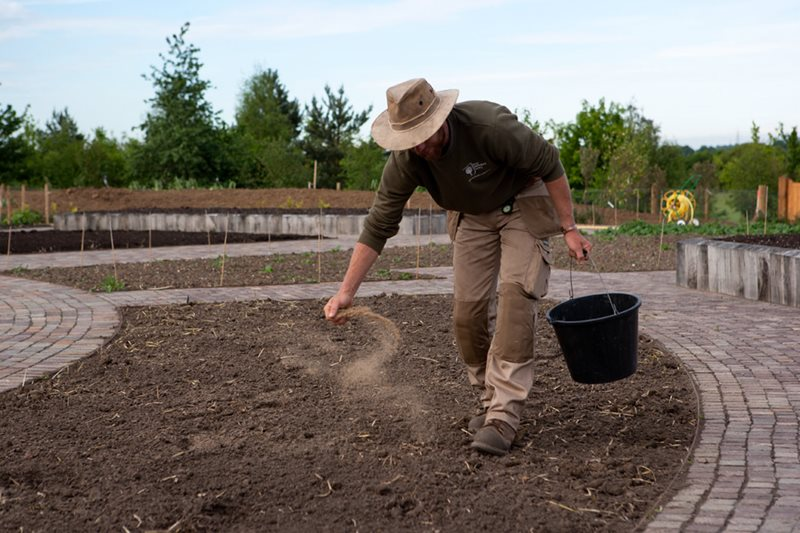 Feeding the soil with bone meal