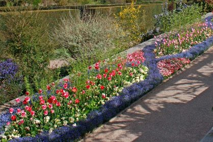 Spring bedding at Rosemoor