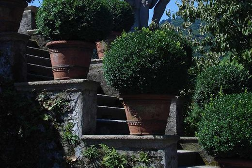 Pots of topiary at Isola Bella, Italy
