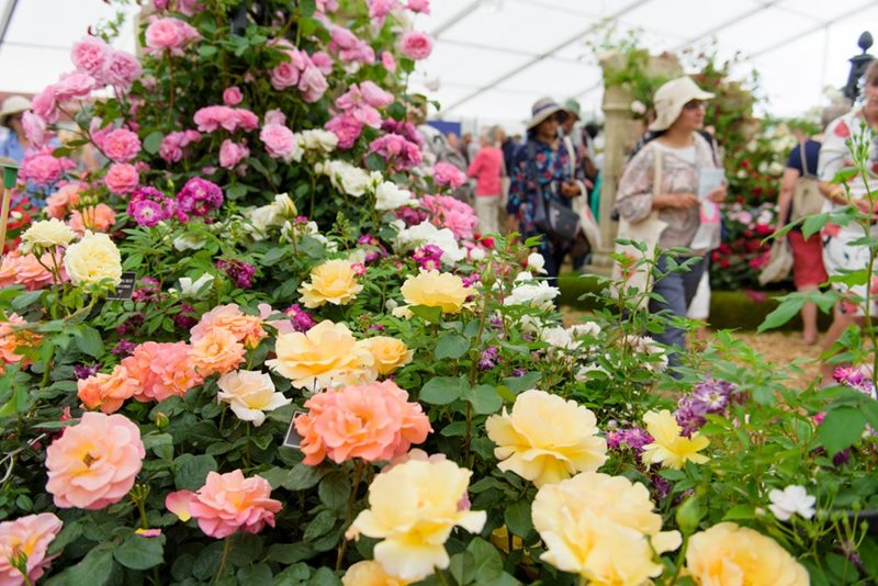 Festival of Roses at Hampton Court Palace