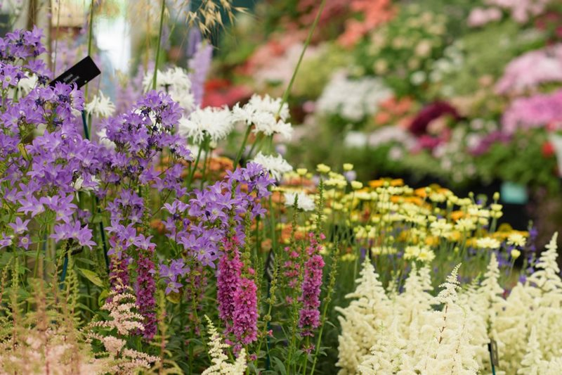 Display in the Floral Marquee