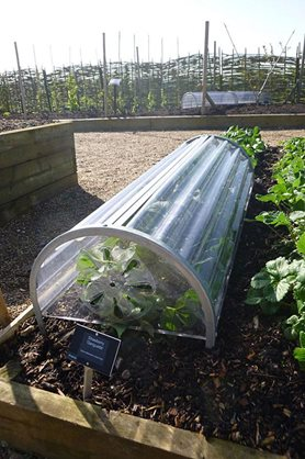 Cloche protection for the strawberries