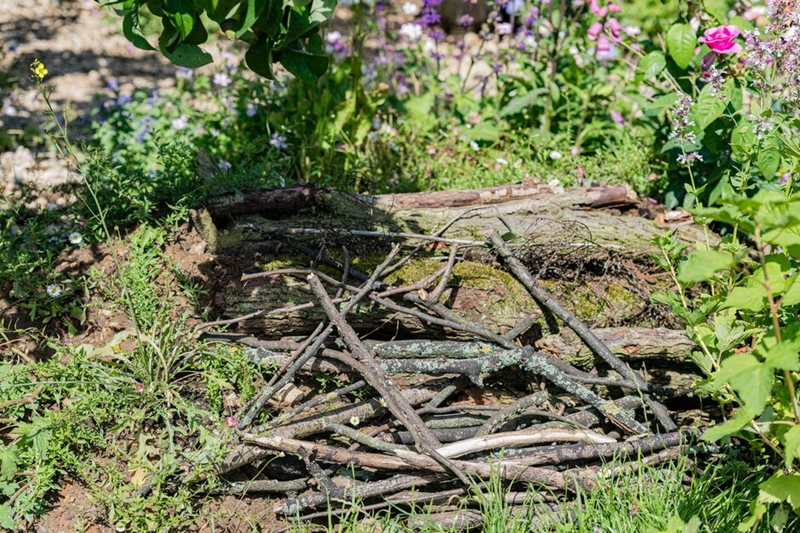 Log piles make homes for lots of creatures