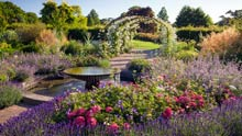 Visit Wisley in summer