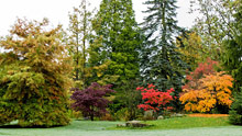 Visit Harlow Carr in autumn