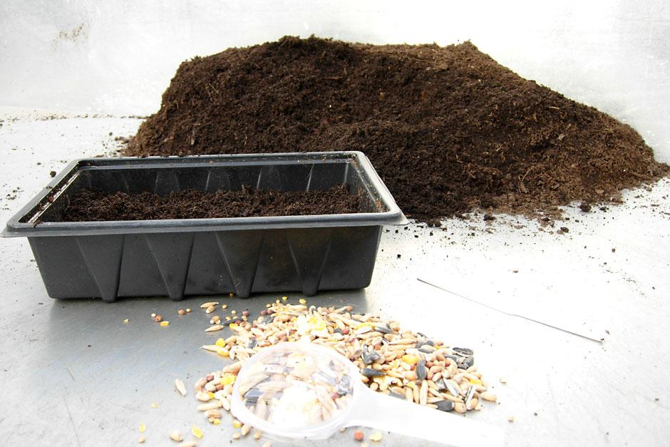 Investigate what's in bird seed