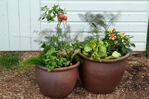 veg in containers