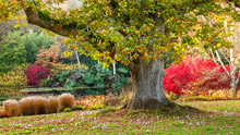 Visit Rosemoor in autumn