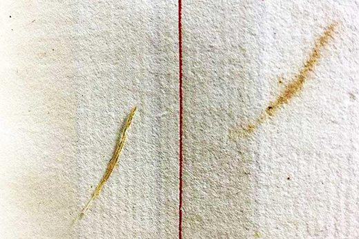 tiny feather found in the account book
