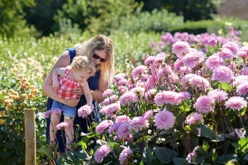 Mother and child look at dahlias