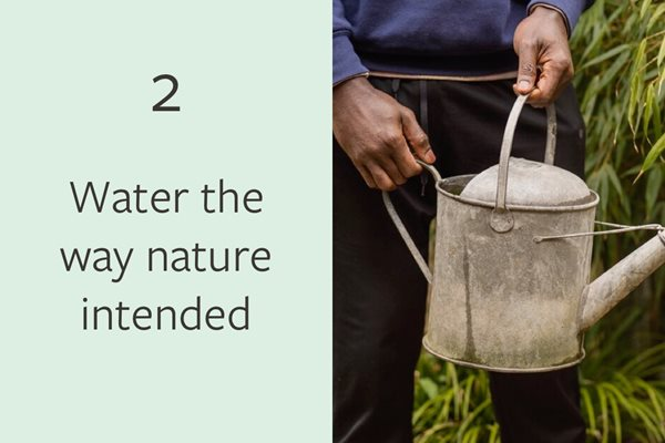 2. Water the way nature intended