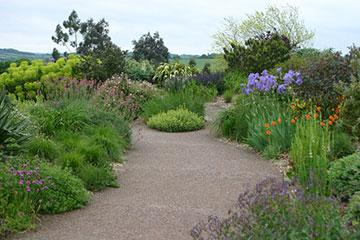 The Dry Garden in late spring