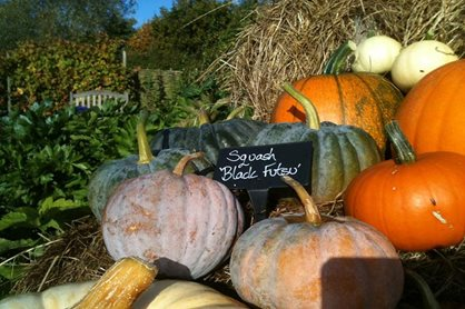Squash 'Black Futsu' in the display at RHS Garden Hyde Hall