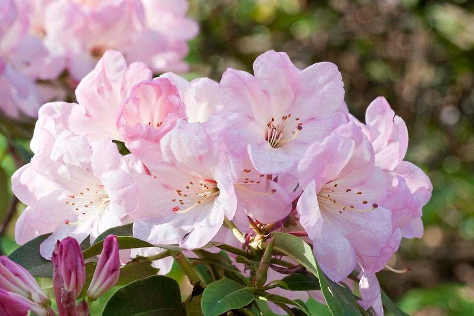 Find out more about RHS plant groups