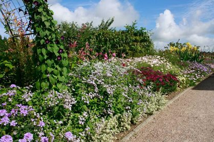 Summer bedding at Rosemoor 2014