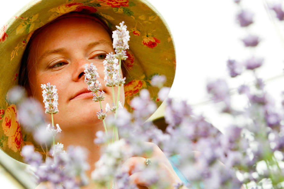 Discovering scented lavender