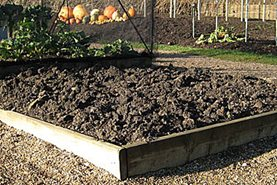 Luckily many of our veg beds are raised, which helps excess rain drain away quickly