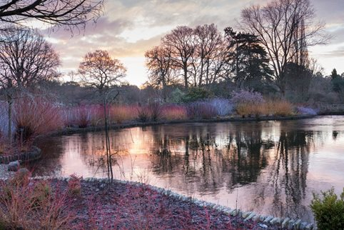 A view of the Wisley Winter Walk