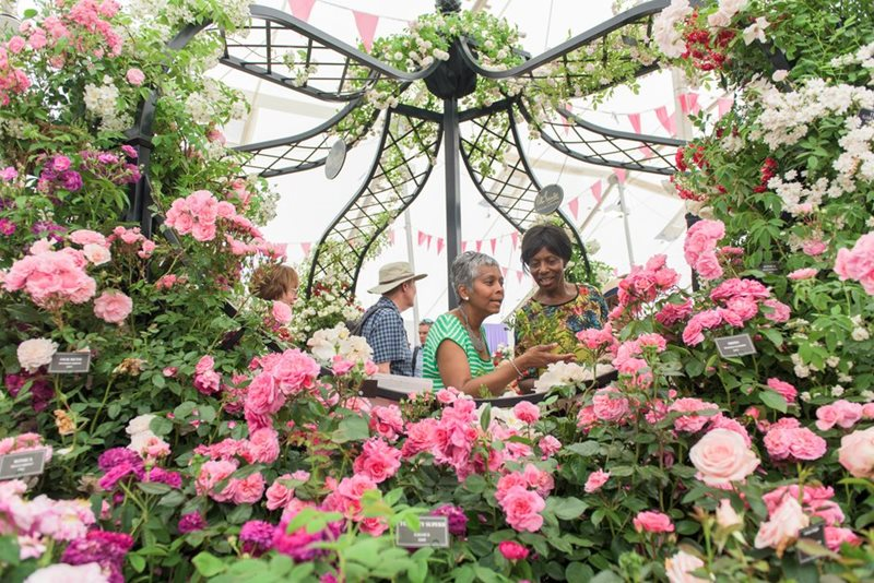 Visitors enjoy the Festival of Roses