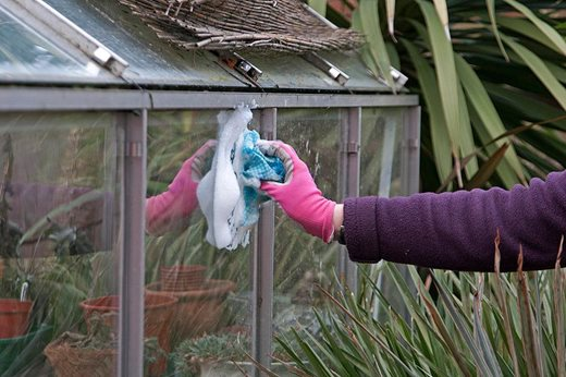 cleaning greenhouse