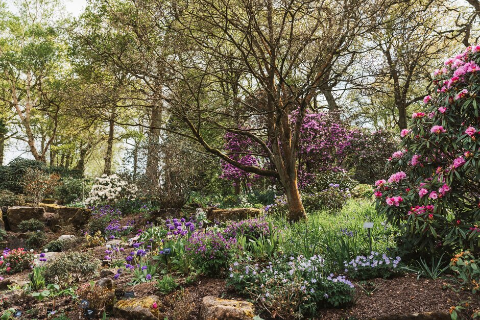 Spring colour cascades through the Woodland at RHS Garden Harlow Carr