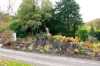 Newly planted border
